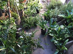 Brunswick Indoor Plant Sale - Heaps of Bargains! Brunswick Moreland Area Preview