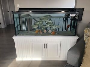 75 gallon aquarium