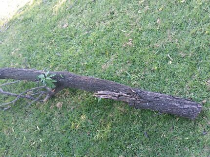 Free Firewood from an Almond tree Balcatta Stirling Area Preview