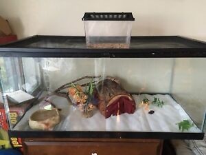 Leopard Gecko, Tank and accessories
