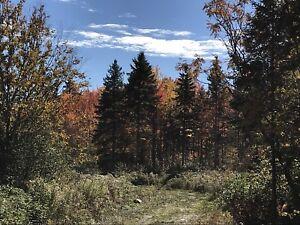 Terre à bois à louer pour la chasse (Bellechasse)
