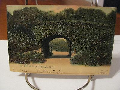 "1906 ""Ivy Arch at the Park, Buffalo, N.Y"" Postcard"
