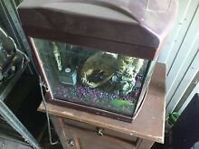 Glass Fish tank Clyde Casey Area Preview