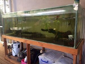 6ft Fish Tank Barron Cairns City Preview