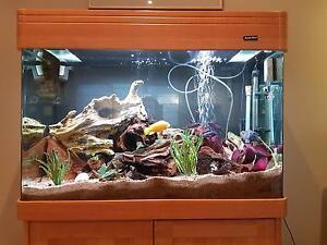Complete Aquarium Fish Tank Callala Beach Shoalhaven Area Preview
