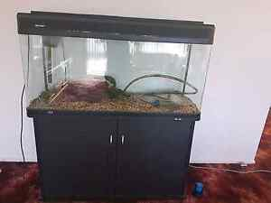 4ft fish tank Ruse Campbelltown Area Preview