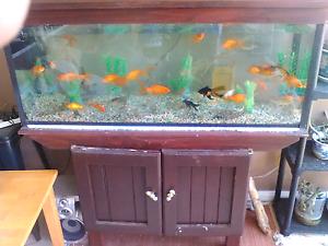 Gold fish aquarium for sale Willmot Blacktown Area Preview