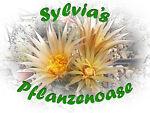 Sylvia's Pflanzenoase