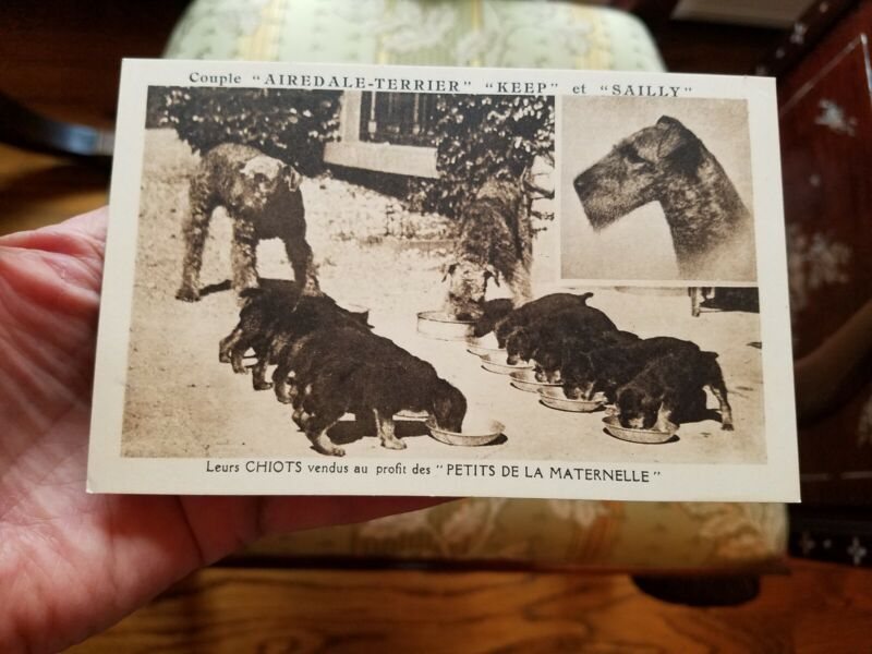 Vintage French France Airedale Terrier 10 Pups Puppies Post Card Postcard Sweet