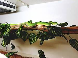 Green Tree Python - Aussie Native Female Pascoe Vale Moreland Area Preview