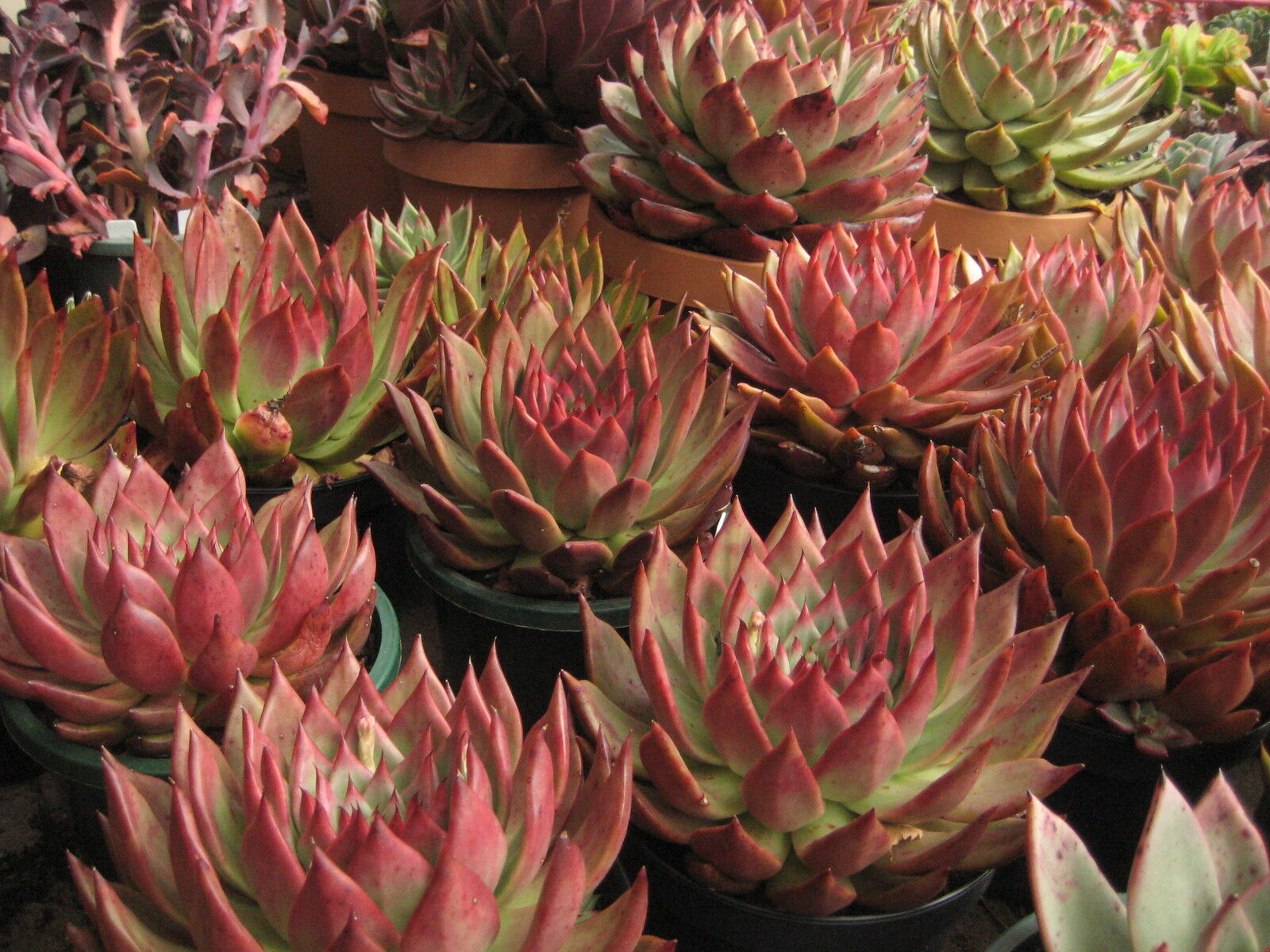 ARID EXOTICS,SUCCULENTS and more