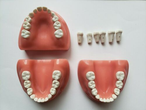 Acadental ModuPRO Typodont PEDO w/ EXTRA ARCH and Replacement Teeth
