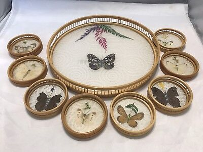Vintage BAMBOO BUTTERFLY TRAY SET 8 COASTERS REAL BUTTERFLIES Taxidermy for sale  Shipping to Canada
