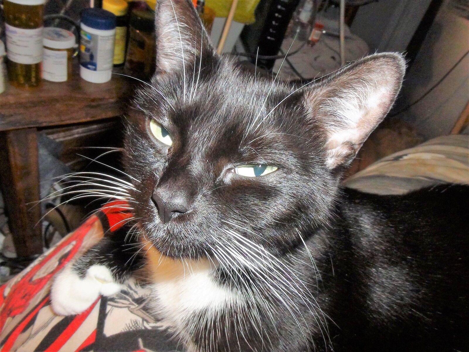 Feral Feline Rescue & Foster Care