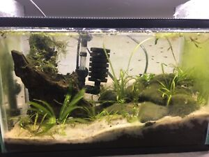 Planted 5.5
