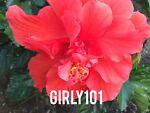 girly101