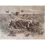 "Circa 1870 Litho  ""Among the Prairie Chickens"" Accompaniment Appleton Journal"