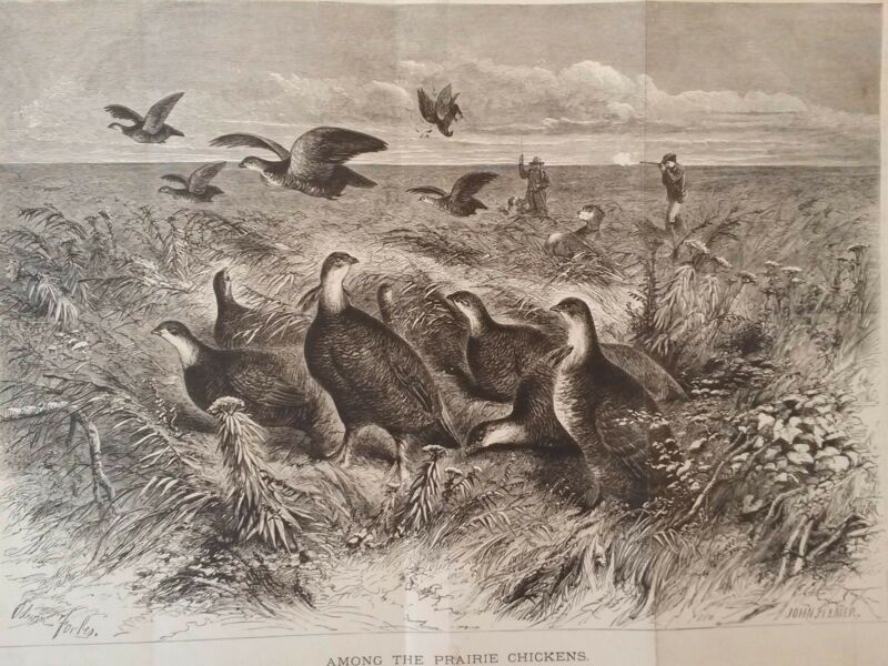 "Circa 1870 Litho  ""Among the Prairie Chickens"" Accompaniment Appleton Journal"