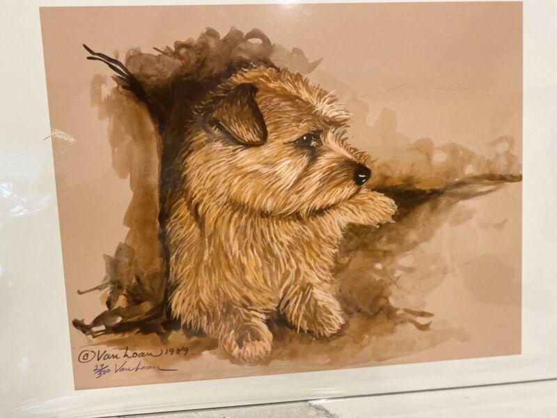Norfolk Terrier Adult Ltd Ed 11x14 Signed Print By Van Loan