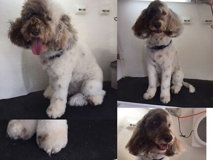 Mobile dog grooming - Blue Wheelers Prospect