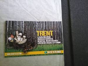 Trents snake catching Acacia Ridge Brisbane South West Preview