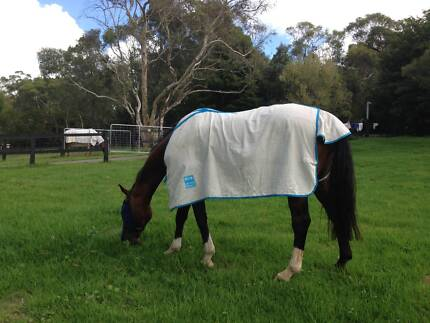 Stable Hand Live In - Sydney Northern Beaches area Duffys Forest Warringah Area Preview