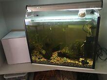 Heated fish tank ( tropical ) Ashburton Boroondara Area Preview
