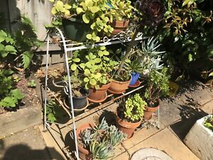 Wrought iron vintage shabby chic 1950 plant stand retro
