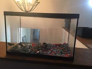 10 gallon fish tank w/ rocks