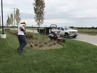 Fall Cleanup & Snow Removal