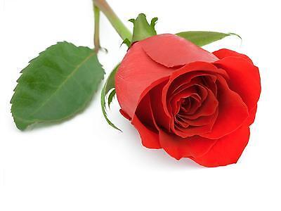 rosebud8225