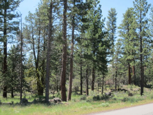 8.25 AC~OREGON LAND~BEAUTIFUL~KLAMATH FALLS FOREST ESTATES~NAT.FOREST~NEAR RIVER