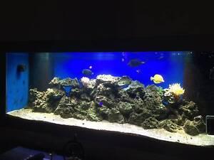 750L Salter water aquarium setup Tranmere Campbelltown Area Preview