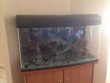 Fish Tank Quakers Hill Blacktown Area Preview