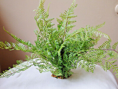 "10"" tall x 12"" wide Delicate ASPARAGUS FERN Bush Artificial Aquarium, stone base"
