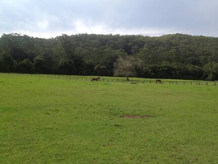 Agistment / Spelling Available Short or Long Term Jilliby Wyong Area Preview