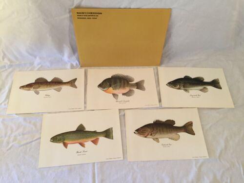 Set Of 5 Daisy Heddon Fish Prints Bass Bluegill Trout Walleye Fishing Art Lot
