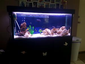 4ft x 1ft x 1.5ft fish tank aquarium Australind Harvey Area Preview