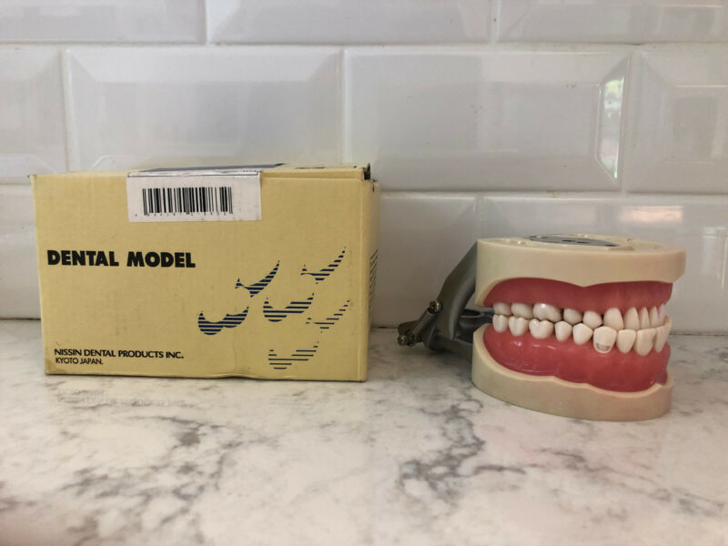 Nissin Dental Products - Dental Model PRO2001-UL-SP-DPM-32