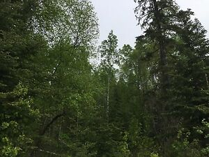 5 ACRE LOT VENDOR FINANCING AND ONLY $35,900 Prince George British Columbia image 5