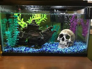 10 Gallon Fish Tank with All Accessories
