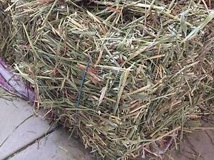 Farm Fresh Oaten Hay (Rabbits Chickens Guinea Pigs) Winthrop Melville Area Preview