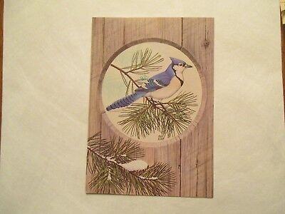 Blue Jay Bird art by Chuck Ripper Continental Sized Postcard