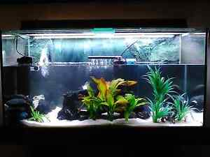 $300 FOR TODAY ONLY HAS TO GO :( $$Custom Tank$$  200 Litre Bunbury Bunbury Area Preview