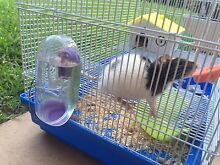 4 Baby silk rats with 2 cages Dover Heights Eastern Suburbs Preview