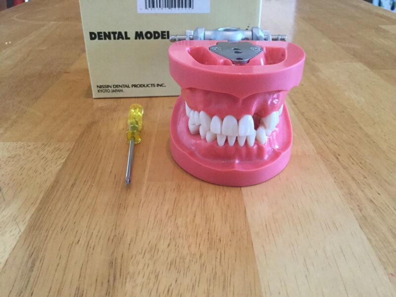 Kilgore Nissin Dental Typodont Collapsed Arch