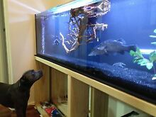 6 foot fish tank and home Aquaponics system Georgetown Newcastle Area Preview