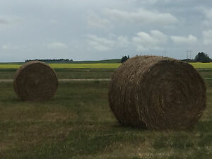 Hay Land for Rent