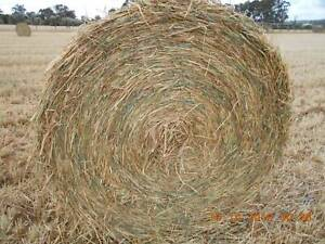 5 x 4 Wheaten Hay  Rolls