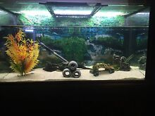Aquarium Lenswood Adelaide Hills Preview